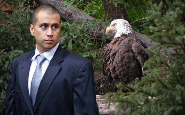 George eagle